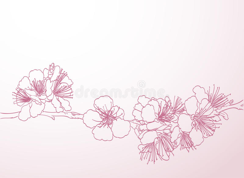 Pink Flower Line Drawing : Blossoming tree line art hand drawing spring stylish