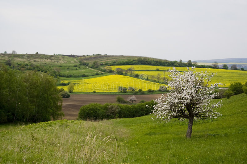 Download Blossoming Tree In Spring In Rural Scenery Stock Image - Image: 5037535