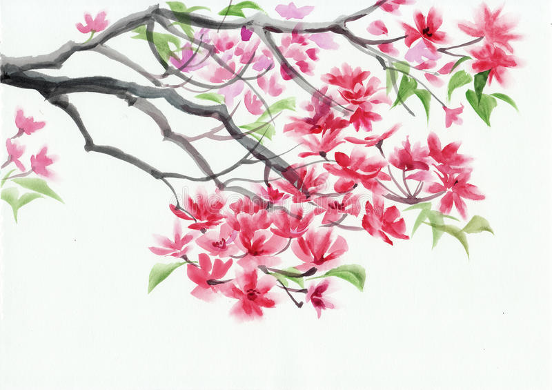 Blossoming tree watercolor painting royalty free illustration