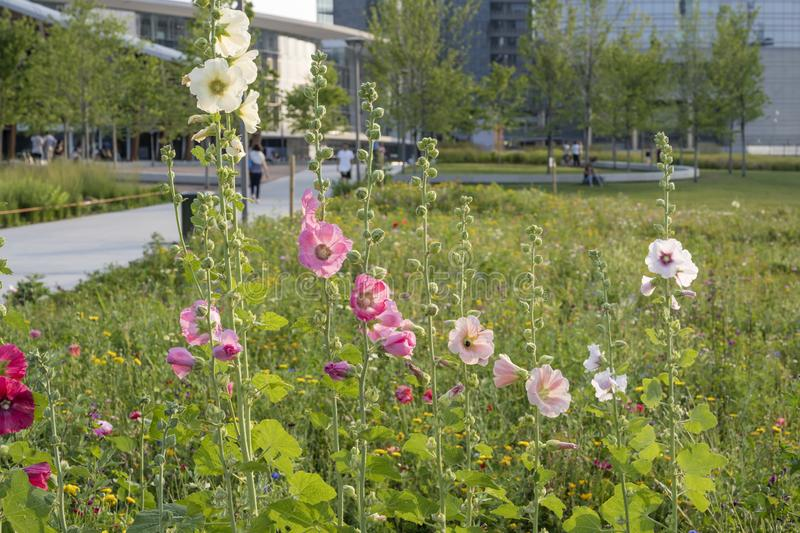 Blossoming wildflowers at urban park, Milan, Italy royalty free stock images