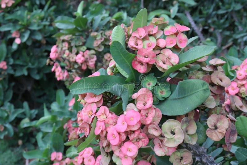 Blossomness das flores imagens de stock royalty free