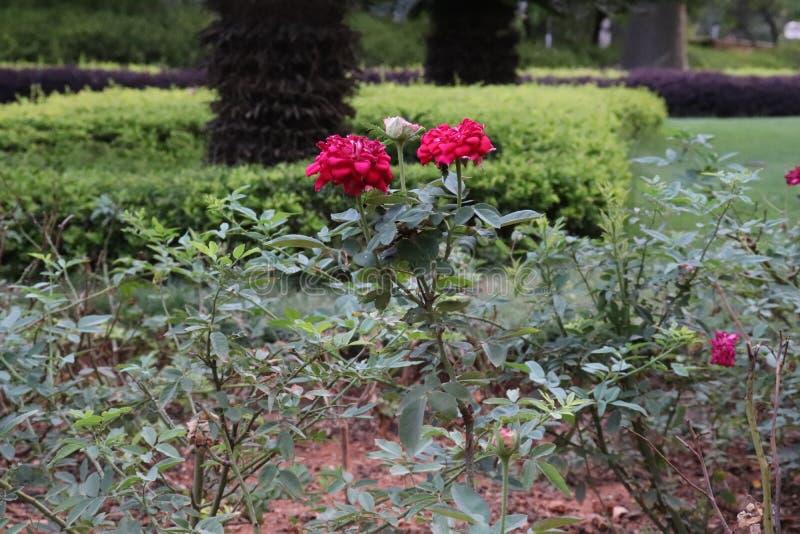 Blossomness das flores imagem de stock