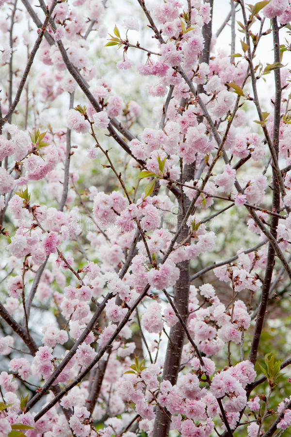 Download Blossoms stock image. Image of blossoming, background - 13947889