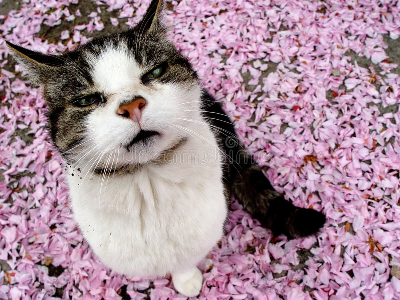Blossomtiger