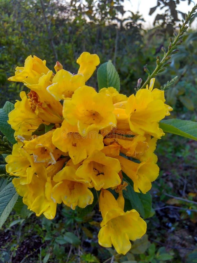 Blossomy yellow stock photography