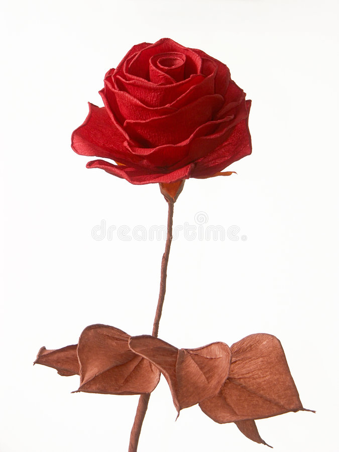 Blotting-paper rose royalty free stock photography