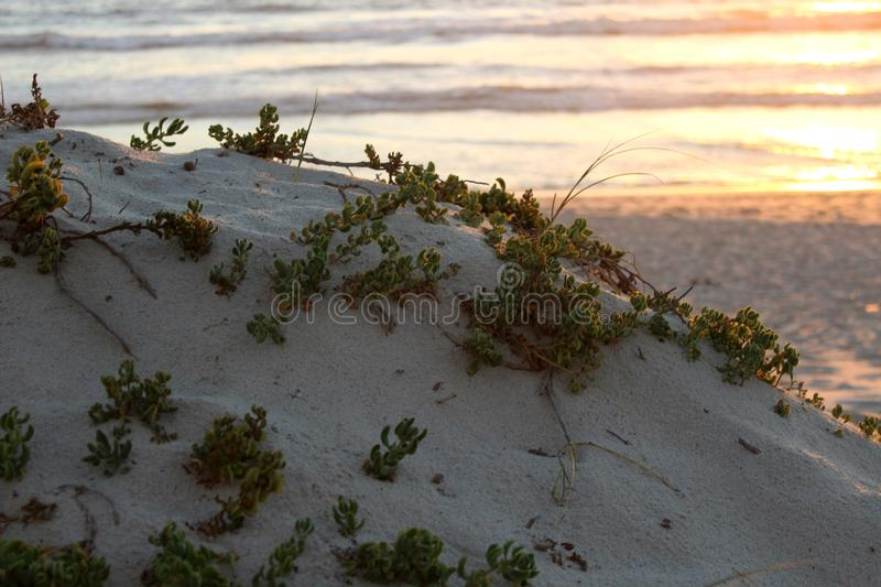 Blouberg Dune. Sunset with waves and dune covered in plants stock images