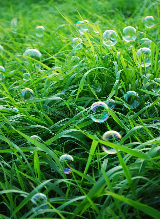 Blow Bubbles In Green Grass Royalty Free Stock Images ...