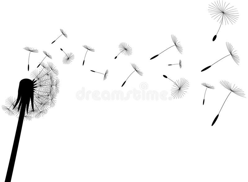 Download Blow dandelion stock vector. Image of plant, nature, blow - 18735736