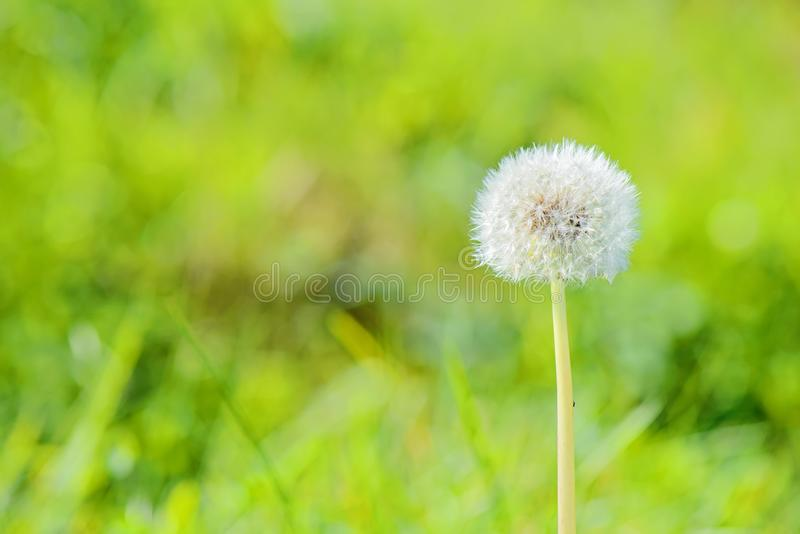Blowball με ένα πράσινο υπόβαθρο στοκ εικόνες με δικαίωμα ελεύθερης χρήσης