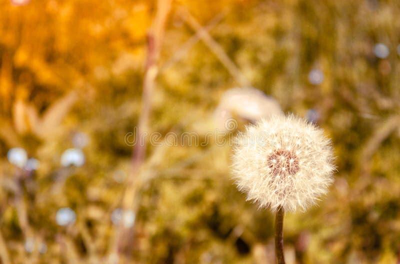 Blowball in Alpen royalty-vrije stock fotografie