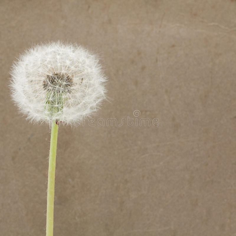 Download Blowball On Dirty Paper - Background Stock Image - Image: 19782247