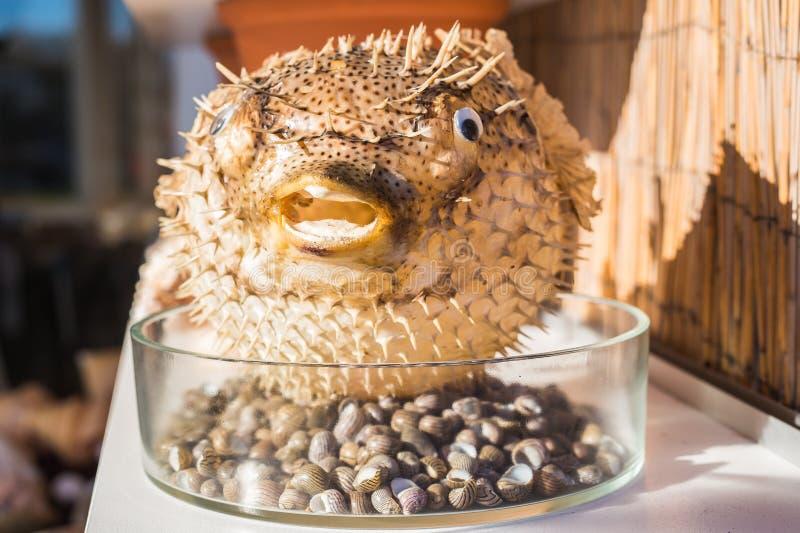 Blowfish или рыбы скалозуба в сувенирном магазине Рыбы дикобраза стоковая фотография