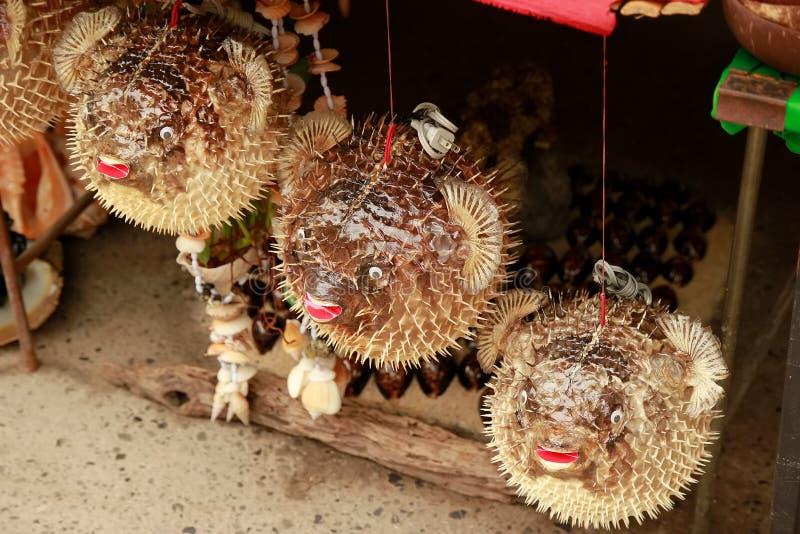 Blowfish или рыбы скалозуба в сувенирном магазине Еж рыба стоковое фото rf