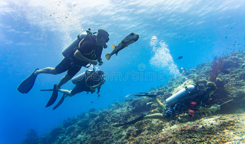 Blowfish accompanies group of tourists scuba diving at coral reef stock photo
