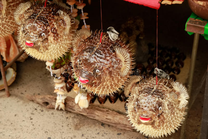 Blowfish eller pufferfisken i souvenir shoppar Porcupinefish royaltyfri foto