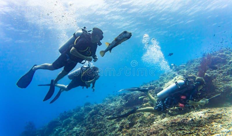 Blowfish medföljer gruppen av turistdykapparatdykning på korallreen arkivfoto