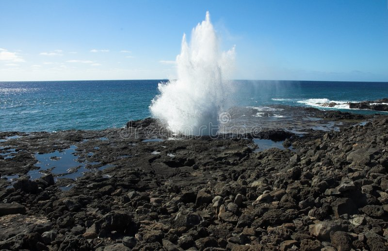 blowhorn hawaii kauai royaltyfria bilder