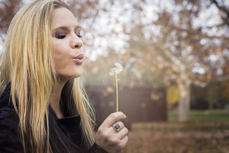 Blowing dandelion royalty free stock images
