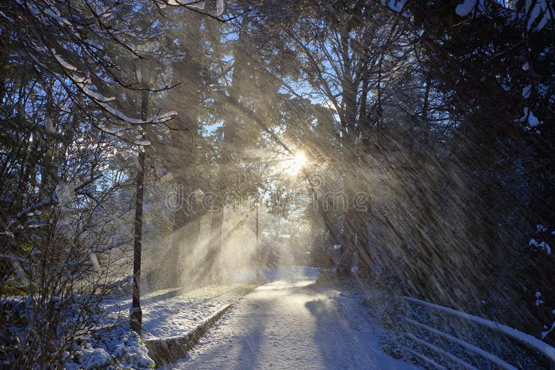 Falling Snow and Rising Winter Sun at Gorge Waterway Park, Vancouver Island, Victoria, B.C., Canada stock image