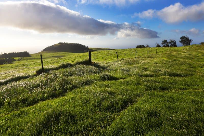 Blowing winds in grassland. In Kohala on the Big Island, Hawaii stock photography