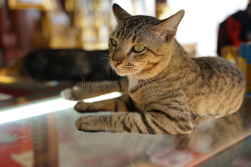 Blown color stray cat sitting on glass looking at the camera. With light under royalty free stock photo