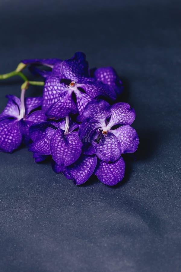 blu dell'orchidea su fondo grigio semplice fotografia stock