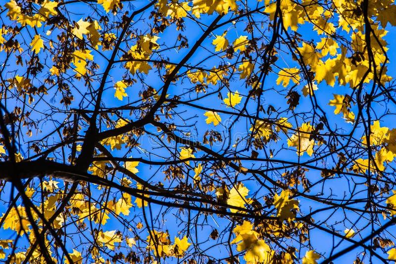 Blu 1 di ottobre fotografie stock libere da diritti