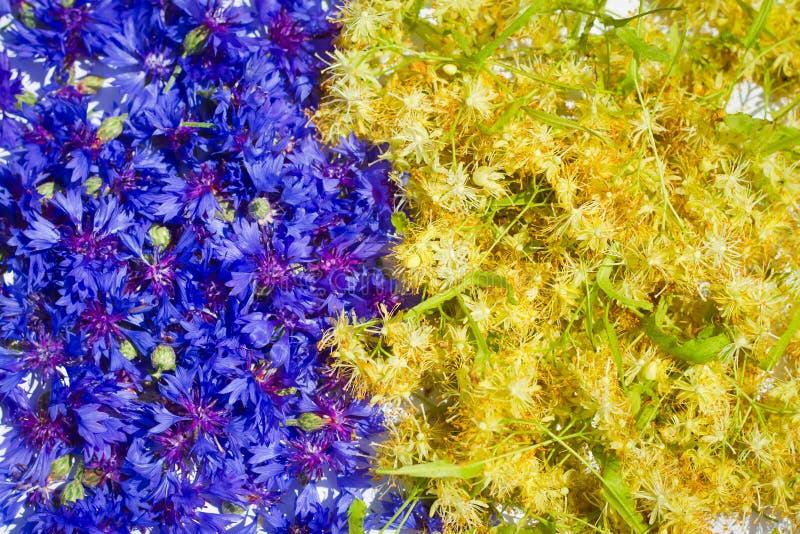 Blu e giallo - fiordaliso e tiglio immagini stock