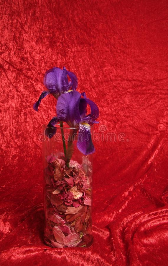 Blu flower. N composition macro with red background stock photography
