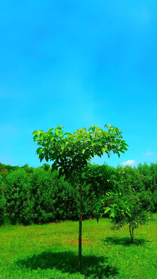 Blu & green stock photos