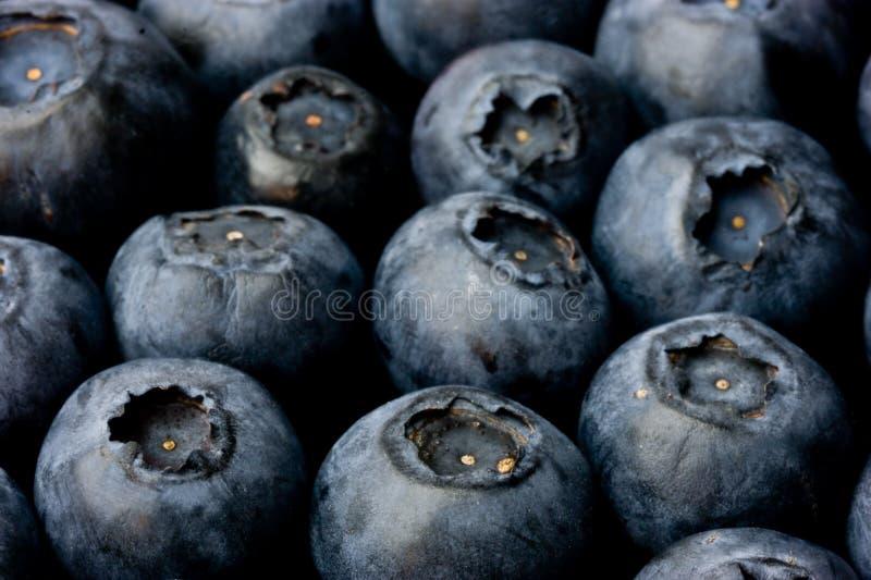 Bluberries zdjęcia stock