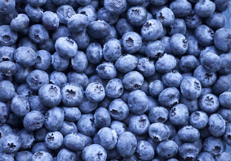 Bluberries obraz royalty free