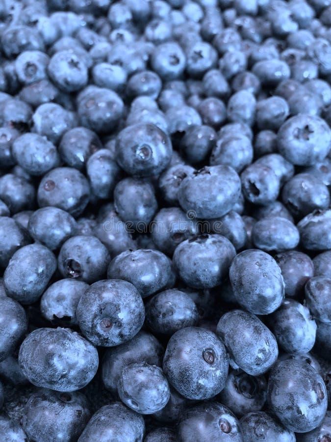 Bluberries imagem de stock royalty free
