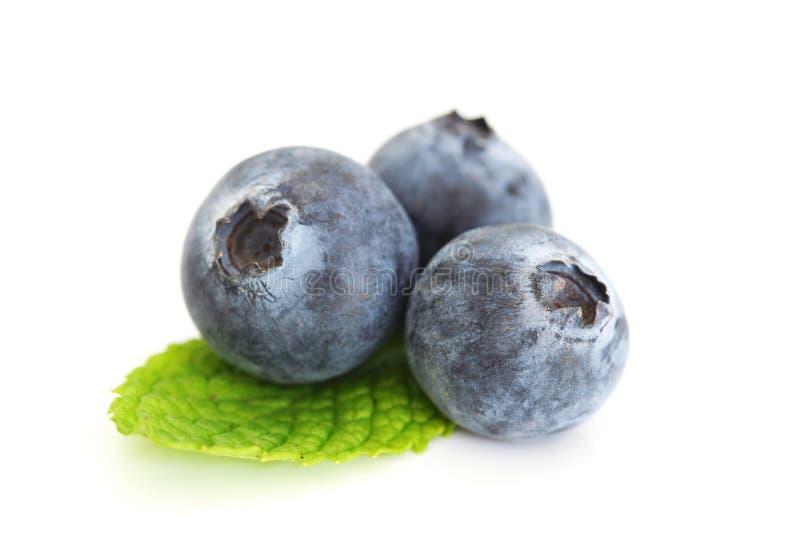 Bluberries auf Weiß stockfoto