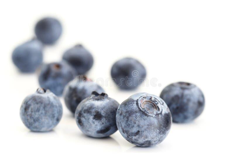 Bluberries en blanco fotografía de archivo libre de regalías