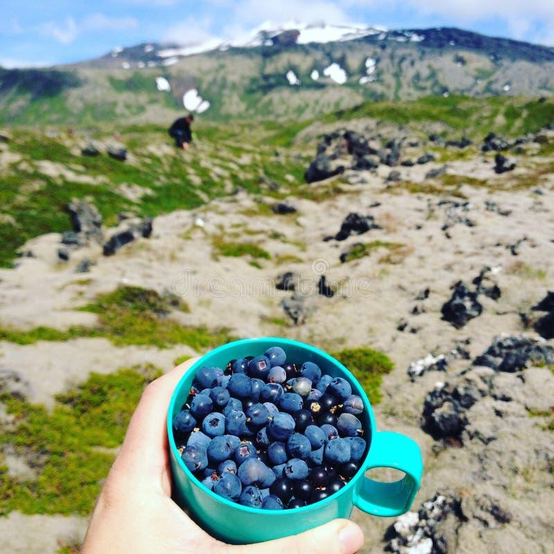 Bluberries in IJsland stock fotografie