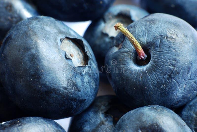 bluberry makro royaltyfria foton