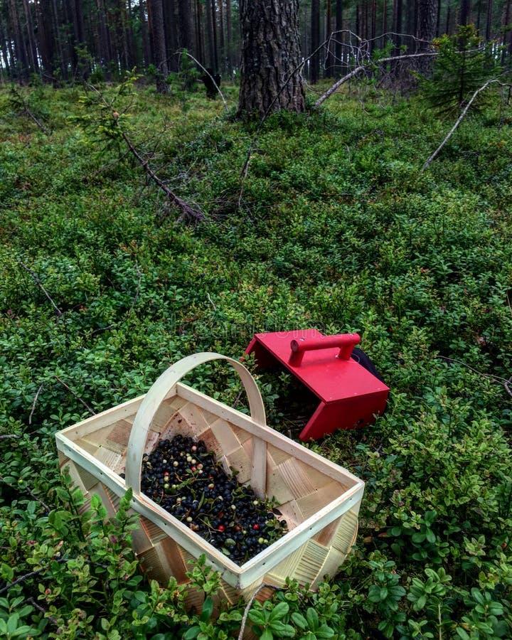 Bluberrys w drewnie obraz stock