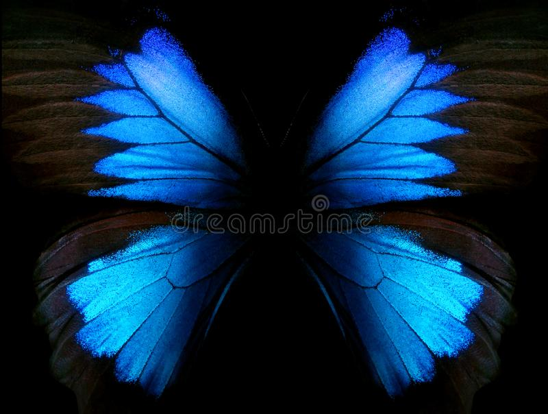Blue abstract pattern. Wings of the butterfly Ulysses. Closeup. Wings of a butterfly texture background. vector illustration