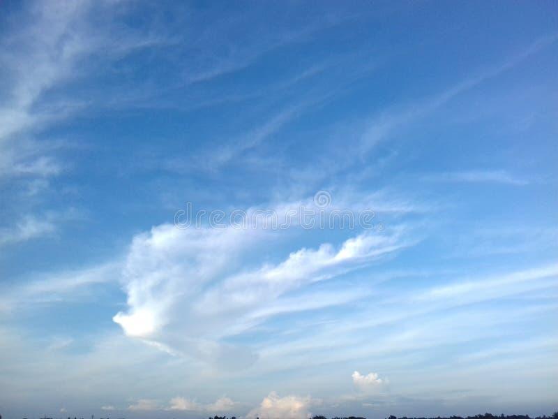 Blue Air-vogelsbeeld stock foto's