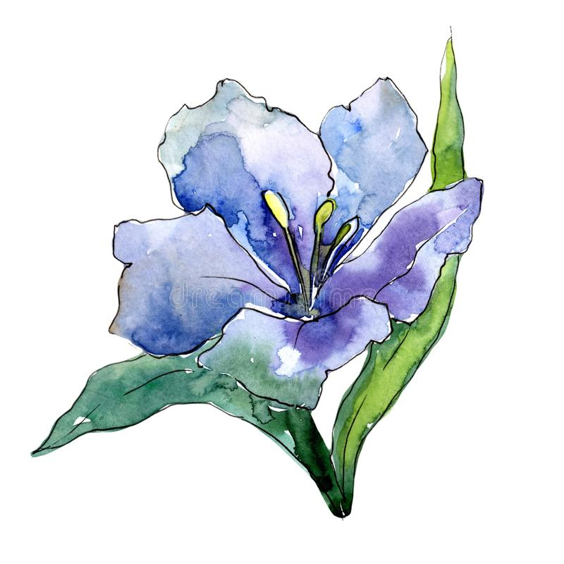 Blue alstroemeria. Floral botanical flower. Wild spring leaf wildflower isolated. Aquarelle wildflower for background, texture, wrapper pattern, frame or royalty free illustration