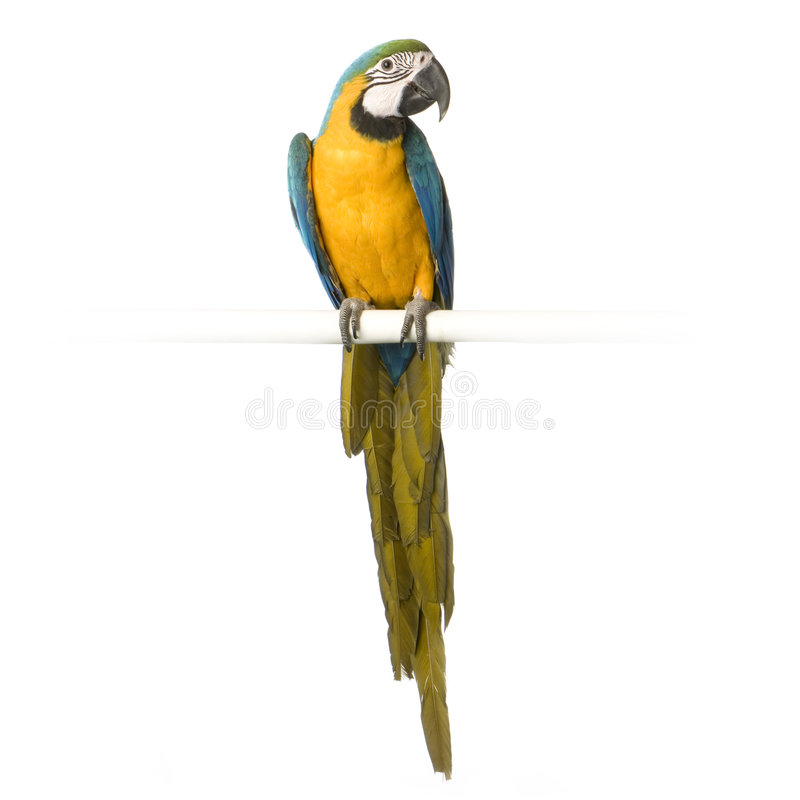 Free Blue-and-yellow Macaw Stock Photography - 2314472