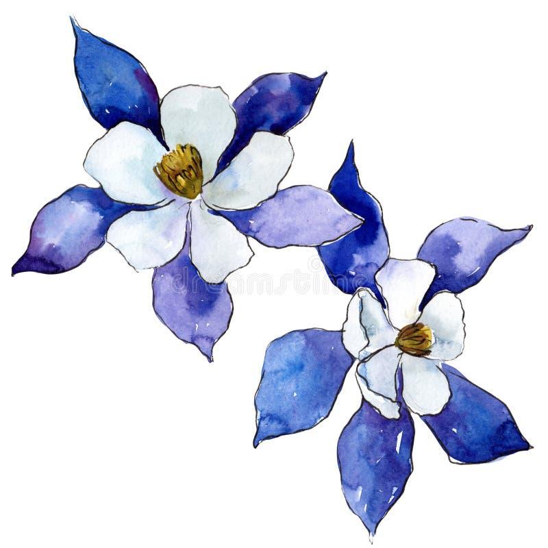 Blue Aquilegia. Floral botanical flower. Wild spring leaf wildflower isolated. Aquarelle wildflower for background, texture, wrapper pattern, frame or border vector illustration