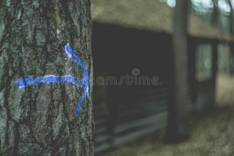 Blue Arrow On Tree Free Public Domain Cc0 Image