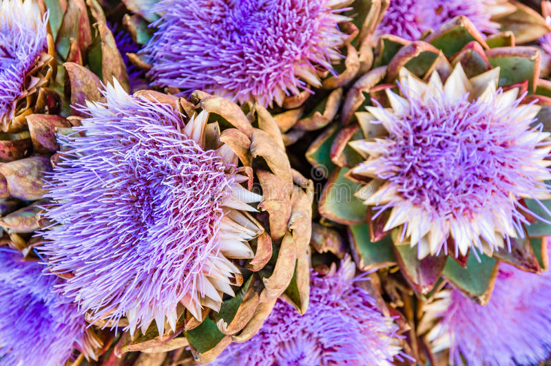 Blue artichoke flowers at the market stock photography