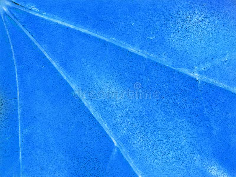 Blue background, maple leaf, macro, close-up. Abstract bright background, texture, maple leaf, macro, close-up royalty free stock image