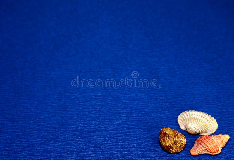 Blue background with seashells. stock images