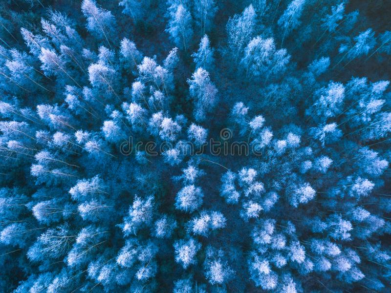 Background texture of a frozen forest at winter, aerial shot royalty free stock photography