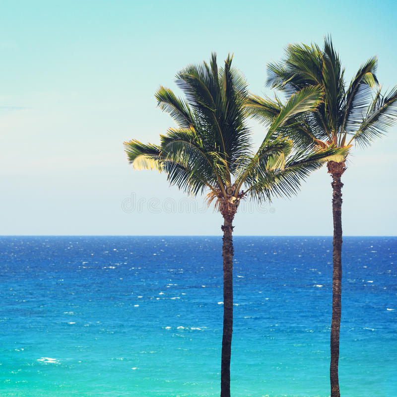 Blue Beach Ocean Palm Trees Background Stock Photo